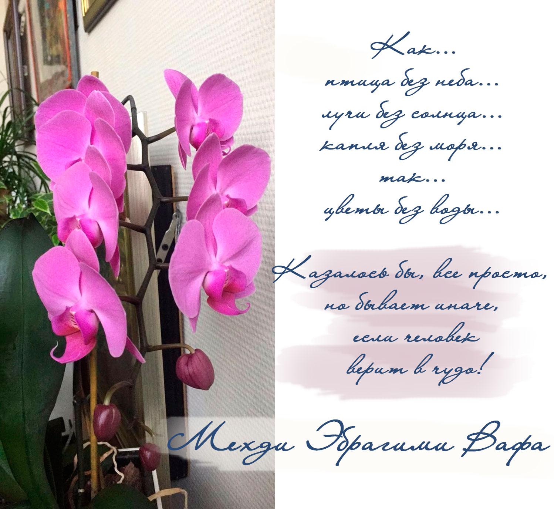 cveti-chuvstvuyut-proza-mehdi
