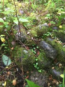 Сооружение из камней, найденное в лесу.